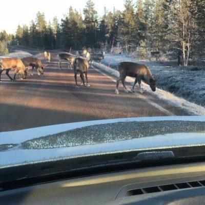 Gäller att köra försiktigt i Dalaskogarna